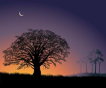 sunrise in savanna_