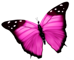 pink butterfly no bkgd