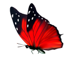 red butterfly no bkgd
