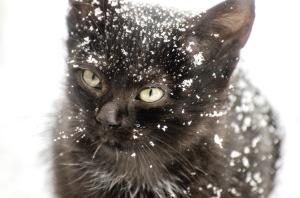 kitten-1102082_1280