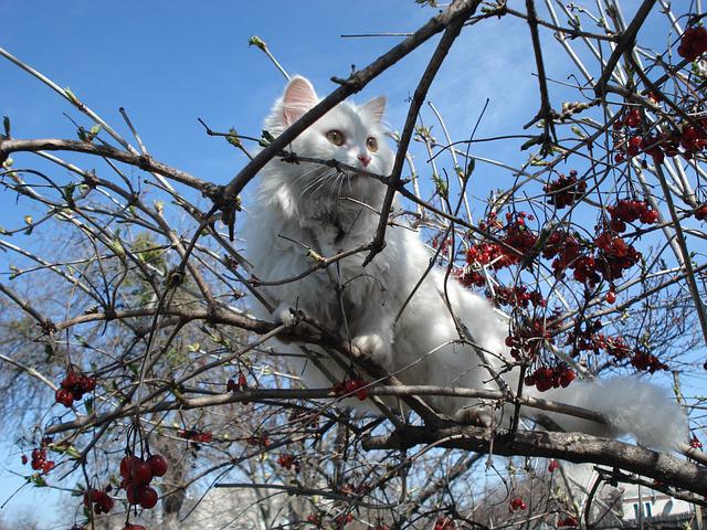 cat-320536_640-pixabay