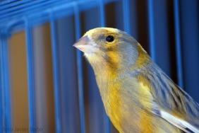 canary-20522_1920