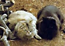 Petunia and Salem